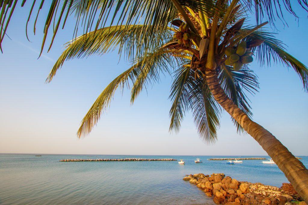 Un palmier devant la mer au milieu sur la plage Saly au sénégal Tourisme