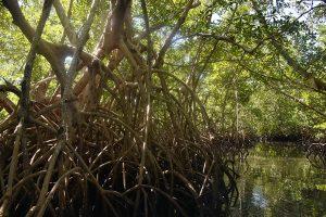 Des branches d'arbres dans un lac, ecologie
